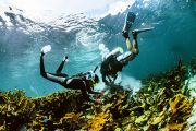 A Race Against Time to Save a Reef from Climate Change in Cancun, Mexico