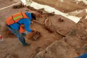 Remains of 60 Mammoths Discovered in Mexico