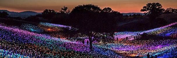 Field of Lights - Australia