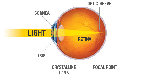 Light to Retina