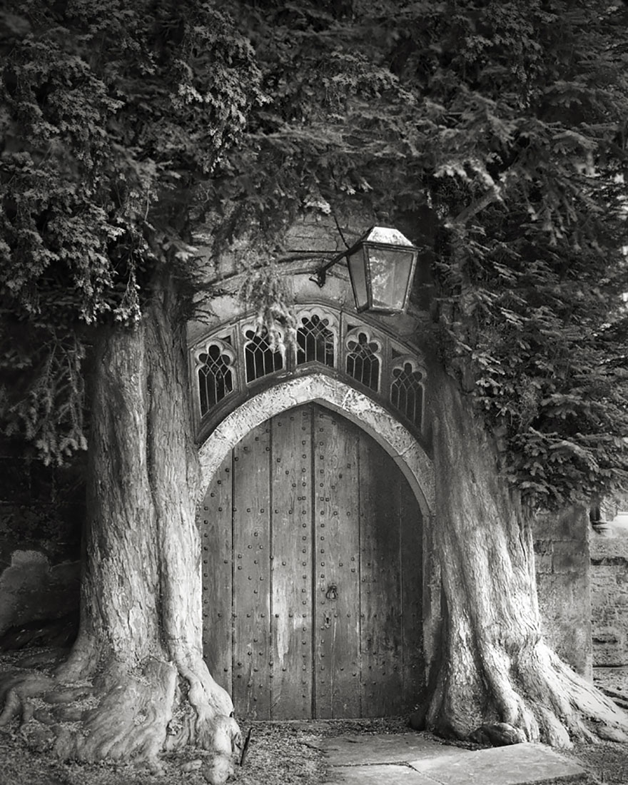 ancient trees beth moon 6
