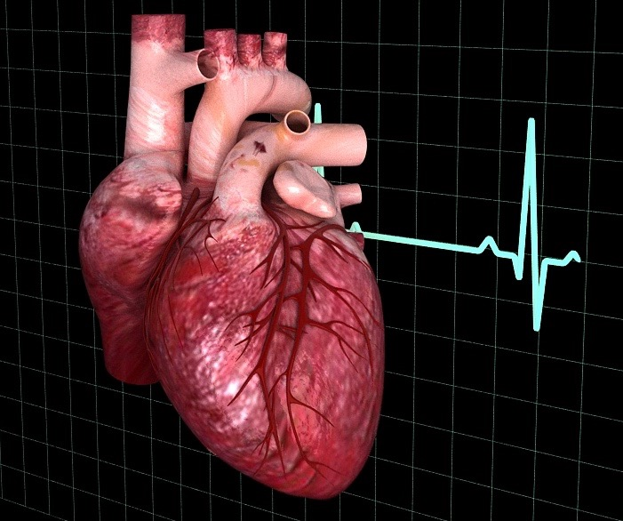 human heart animated 3d model 2