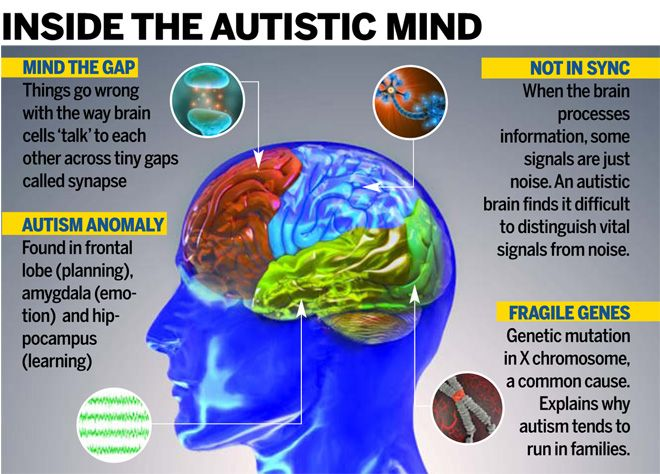 Autism Awareness in the Brain