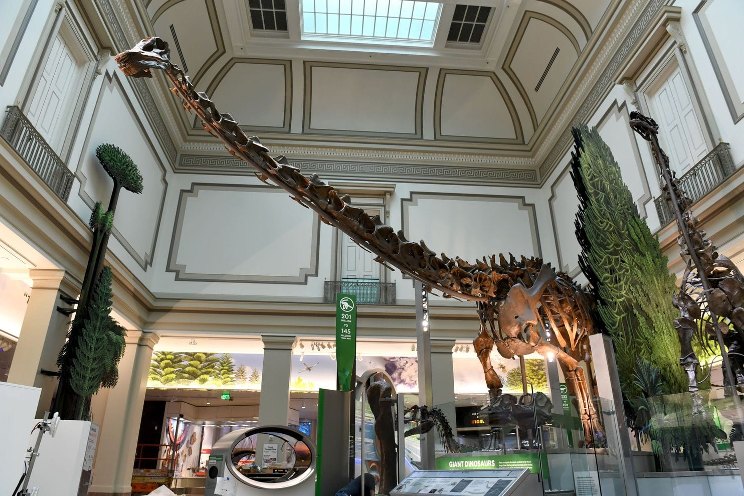 A diplodocus that lived 152 million years ago looms over the National Museum of Natural History