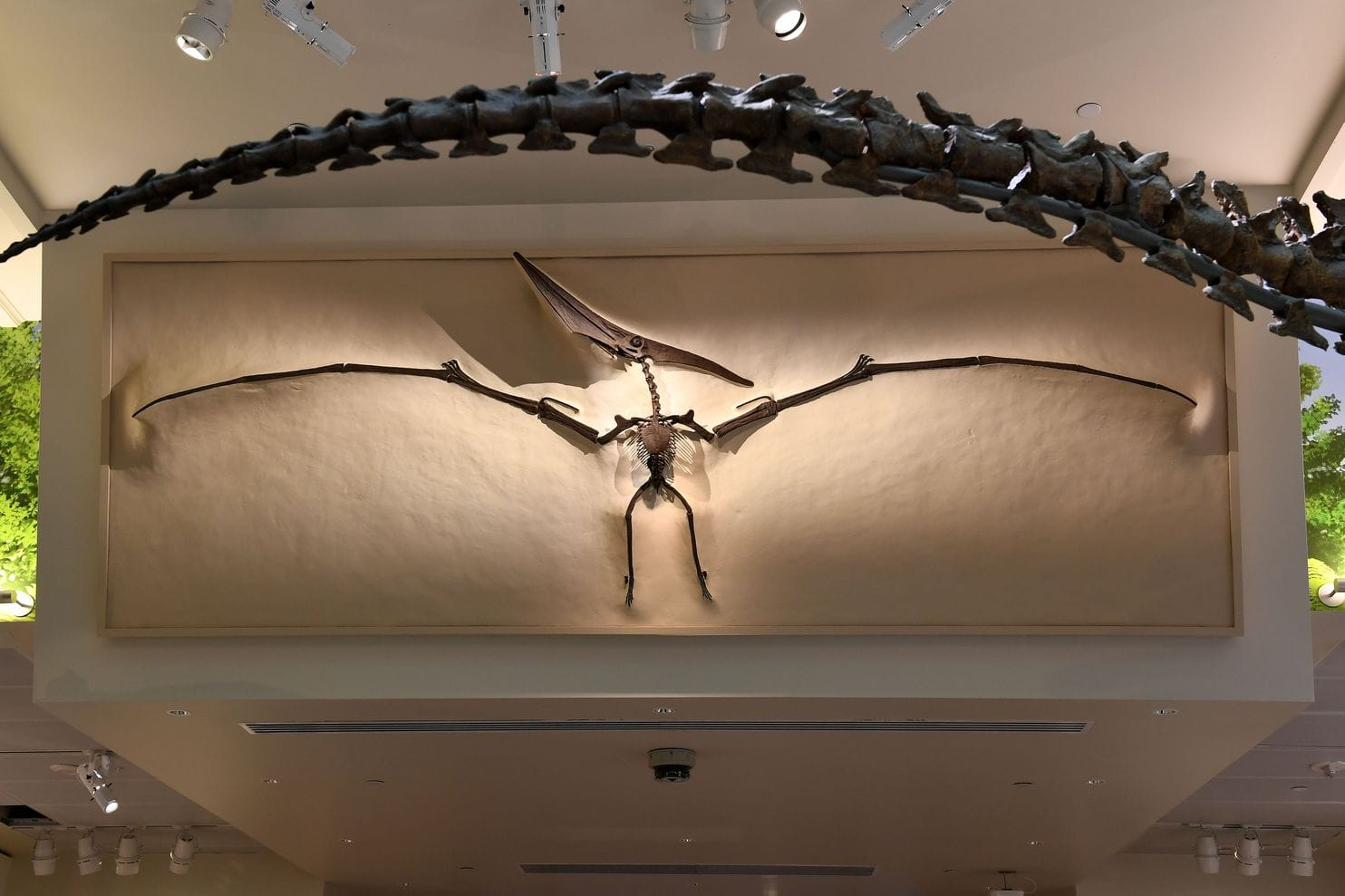 A pteranodon is suspended above the gallery