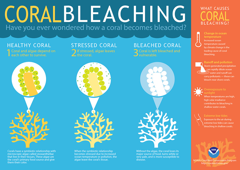 coral-bleaching_process