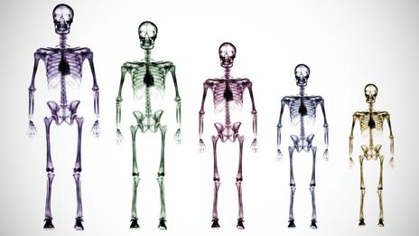 Humans_smaller_skeletons