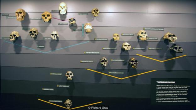 Hominin Relatives dating 10 million years