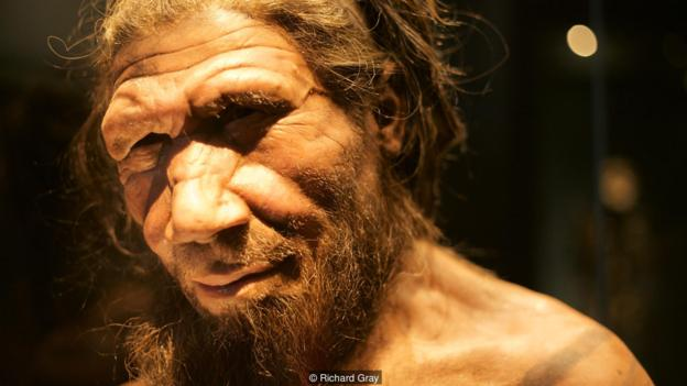 Richard Gray Reconstruction of Neanderthal face