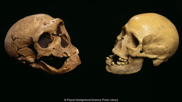 Skull of Neanderthal left moder human right