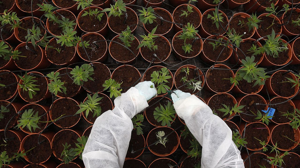 Medical marijuana cultivation