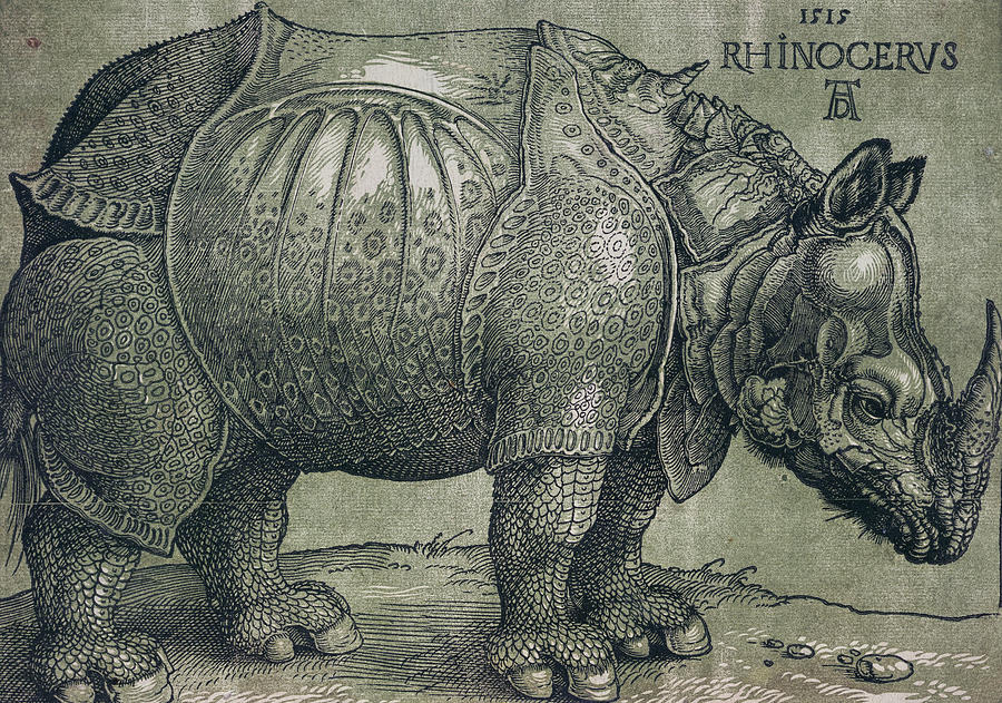 the rhinoceros albrecht durer