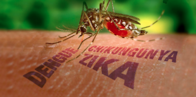 Zika_transmit_diseases