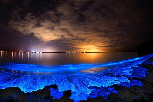 bioluminescent bay in Vieques Puerto Rico
