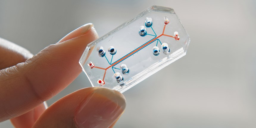 lung on a chip
