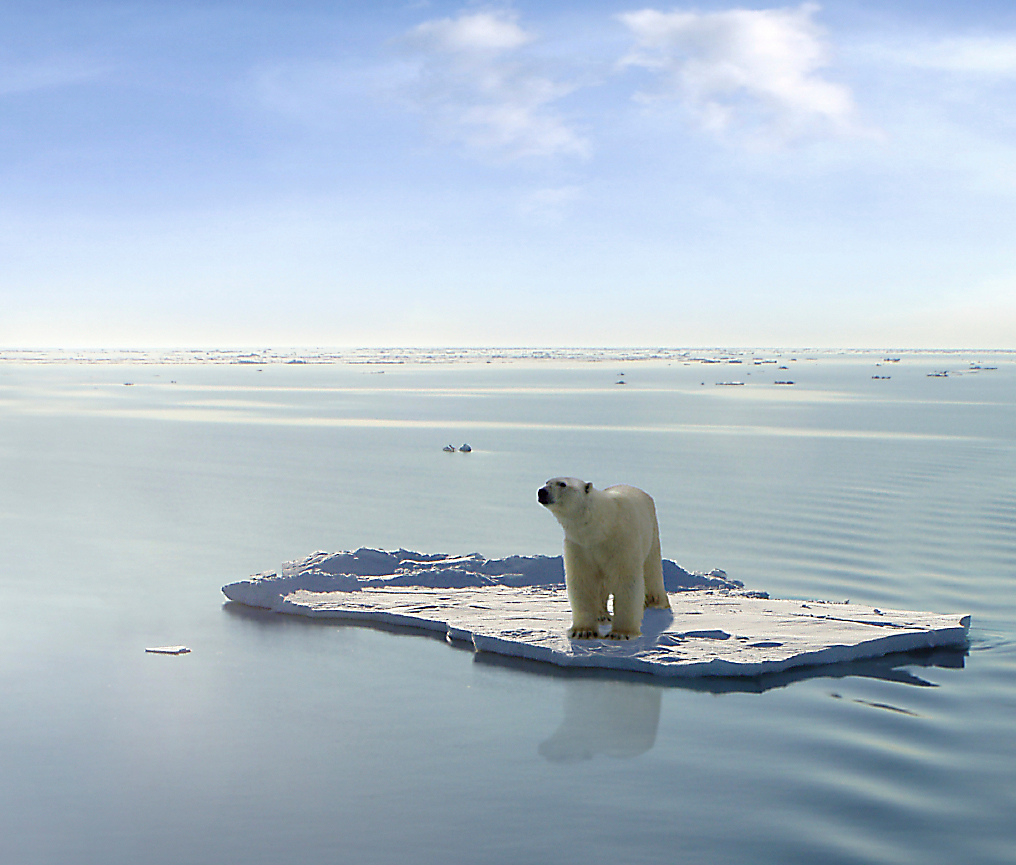 global-warming-2_polar_bear
